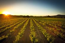 Pinot noir från Foppiano Vineyards – lanseras i California Wine Month