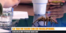 Spindel till husdjur