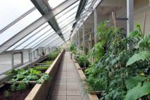 Socialt arbete skapar trygga boendemiljöer i Gårdsten