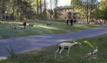 Parkdjur hälsar välkommen till nya Åbyparken i Haninge
