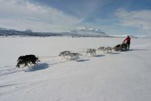 Turismen i Swedish Lapland sensationellt bra!