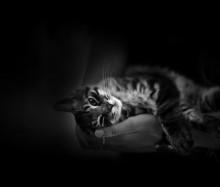 Dags att meditera med kattspinn