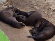 Jätteutterungar har fötts på Parken Zoo Eskilstuna