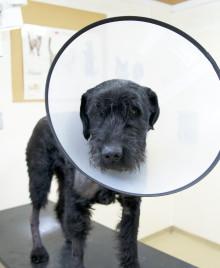 Vad gör jag om min hund blivit biten?