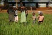 BokningsgBolaget  Klimatkompenserar i Kikonda Forest Reserve i Uganda