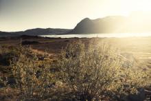 Fly med biodrivstoff fra norske skoger