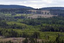 Skogsbruk med naturhänsyn är vanligt på olika ställen i världen
