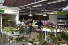 Blomsterlandet fortsätter sin expansion – ny butik i Umeå, Strömpilen