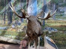 Pressinbjudan: Förhandsvisning av naturum Dalarnas nya utställning