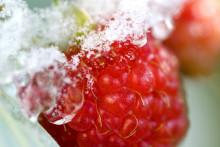 Hyödynnä hyytävä sää ja sulata pakastin – katso vinkit sulatukseen
