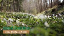 Linnémarschen satsar på trail run och öppnar ny webbplats