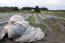 Advarer mot plastbrenning i landbruket