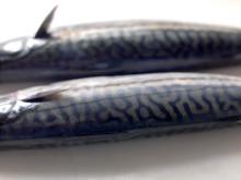 Sterk makrelleksport i november