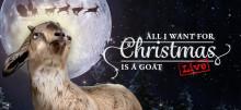 Årets viktigaste livesända julkonsert: Kvinnor sjunger som getter för rättvisa
