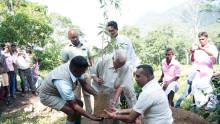 Dilmah ersätter tebuskar för vildmark