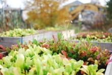 Säsongspremiär för växtpensionat i Kvillebäcken