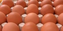 Kananmunia voi syödä kohtuudella