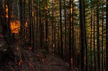 Centerpartiet säger nej till exploatering av Årstaskogen