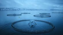 La acuicultura reduce la explotación medioambiental y es crucial para la satisfacción de la demanda mundial de alimentos