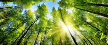 Proton Group - med hållbarhet på agendan