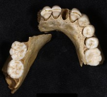 European neandertals were on the verge of extinction even before the arrival of modern humans