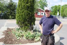 Blommor stjäls ur kommunens planteringar