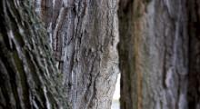 Pengar till Smålandslänen för att utveckla skogens värden