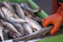 Svenska kvoten för torsk i Kattegatt redan slut - HaV stoppar årets fiske