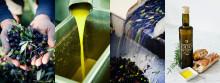 Koncentrerad, kraftfull och knallgrön – nu kommer årets olivolja från Terreno
