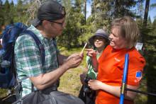 Projekt PINUS visar skogen på webben