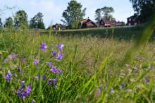 Pressinbjudan: Samla på trädstammar och gör ängsmark av gräsmattan – Dalarna har fått en ny handlingsplan för grön infrastruktur
