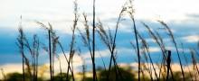 Mer förnybar energi i skånska kommuner
