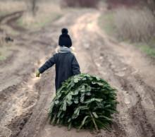 Ensomt juletræ søger julegaver