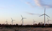 Ny Vindvalrapport om vindkraft, fåglar och fladdermöss