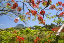 Event-Kalender Mauritius - so international wie nie zuvor