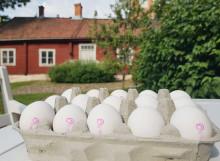 Ägg är den mest klimatsmarta proteinkällan – enligt svenska folket