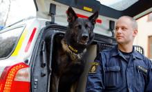 Attack är Årets polishund 2017