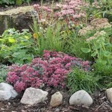 Välj vad du vill plantera i din trädgård!