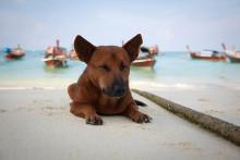 Ao Nang: Welttierschutzgesellschaft besorgt über Reaktionen auf Beißvorfall