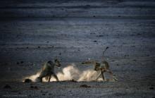 Stærk fotoserie skildrer truede afrikanske dyrs kamp for overlevelse