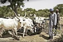 Arla verstärkt sein Engagement für die Entwicklung eines nachhaltigen Milchsektors in Nigeria