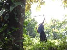Støtte til skoven er vigtigere end nogensinde i uroplagede Nicaragua