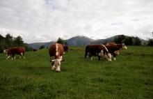 EAT- Lancet rapporten - liten overføringsverdi for norske forhold