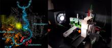 Im Tandem mit der Humboldt Universität zu biotechnologischen Verfahren der Zukunft
