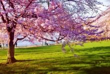 Nordstan välkomnar våren med Nowruz 15-19 mars