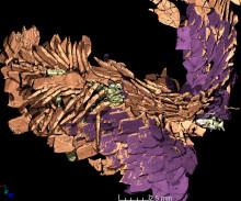 Matrester från 230 miljoner år gammalt bajs i 3D