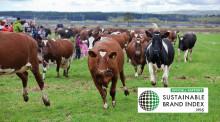 Norrmejerier bland de hållbaraste i Skandinavien