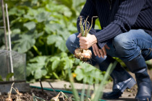 Community food growing sites identified in Moray