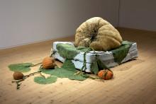 Ny utställning i konsthallen: Växtkamp