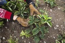 Sifoundersökning visar: Svenskarna önskar sig en lättskött trädgård
